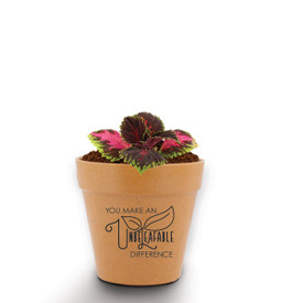 A Mini Flower Pot Kit Features The Inspirational Message: You Make An Unbeleafable Difference. Grows Coleus.