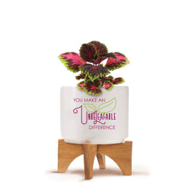 Bamboo Stand With White Ceramic Planter. Inspirational Message Reads: You Make An Unbeleafable Difference. Grows Coleus.