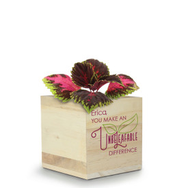 This Natural Pine Wood Plant Kit With Coleus Seeds Features The Inspirational Message: You Make An Unbeleafable Difference