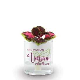 Ceramic Planter With Glass Reservoir & 2 Hydroponic Wicks. Message Reads: You Make An Unbeleafable Difference. Grows Coleus.